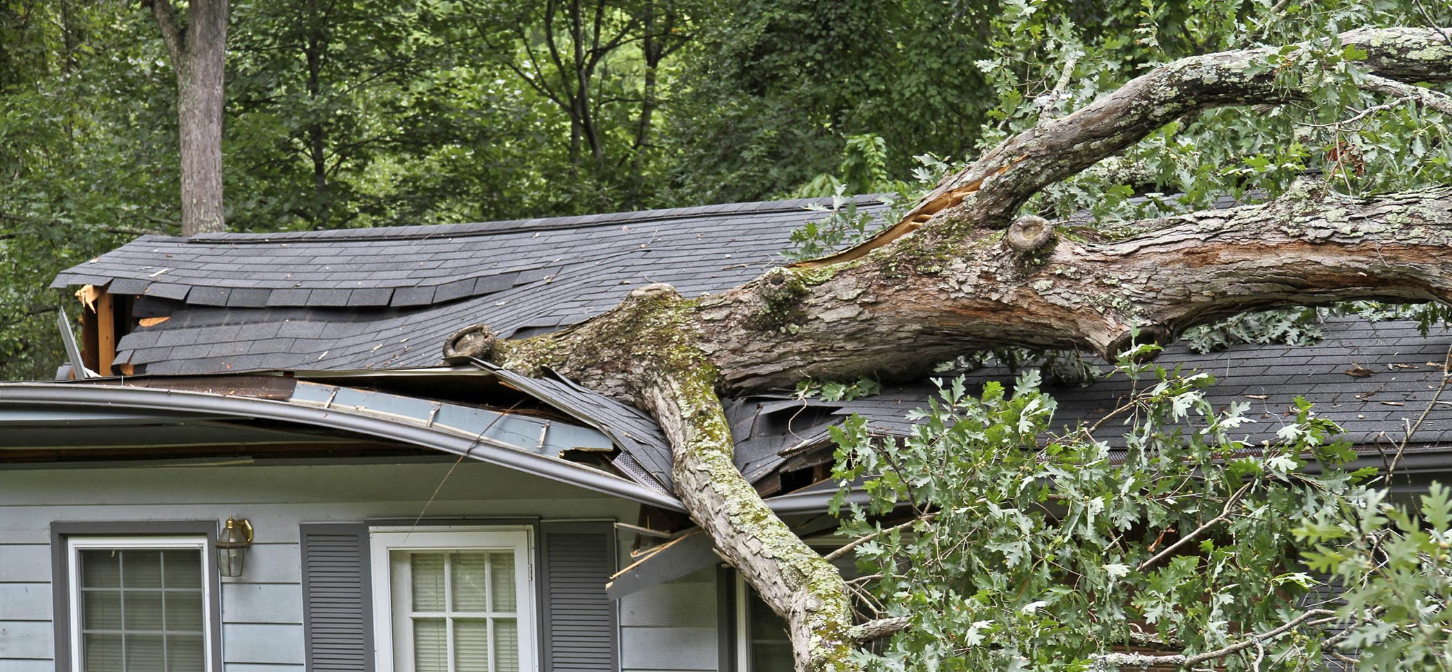 home insurance claims for tree damage